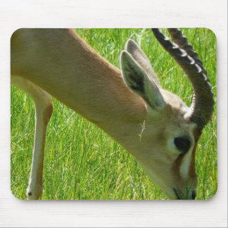 Gazelle Grazing Mouse Pad