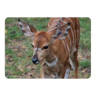 Gazelle Cards