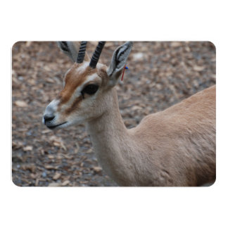 Gazelle 5x7 Paper Invitation Card