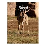 Gazelle israelí tarjetas postales