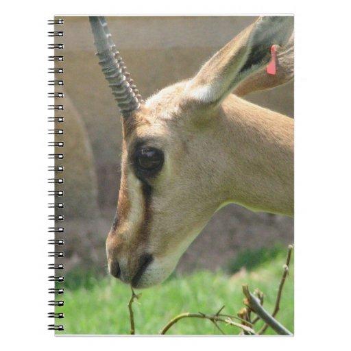 Gazelle Notebook