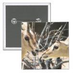 Gazelle Pair Button