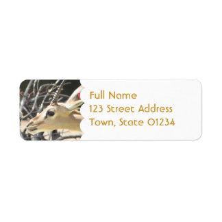 Gazelle Pair Mailing Labels