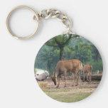 Gazelle, parque zoológico del animal salvaje, 羚. llavero personalizado