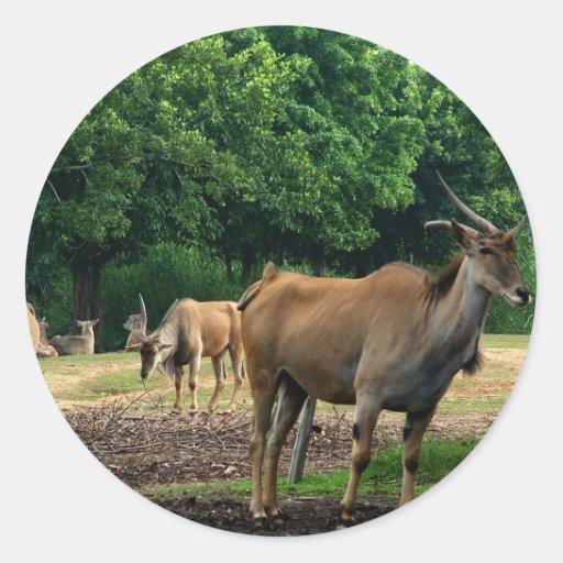 Gazelle, parque zoológico del animal salvaje, 羚. pegatina redonda