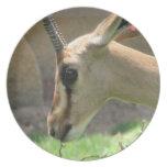 Gazelle Plate