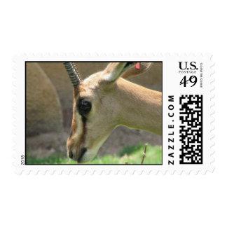 Gazelle Postage Stamp