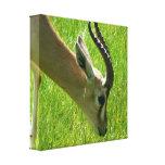 Gazelle que pasta la impresión de la lona lona envuelta para galerías