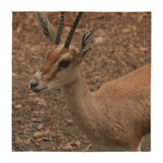 Gazelle Beverage Coaster