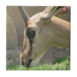 Gazelle Tile