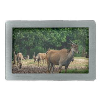 Gazelle, wild animal zoo,羚. belt buckle