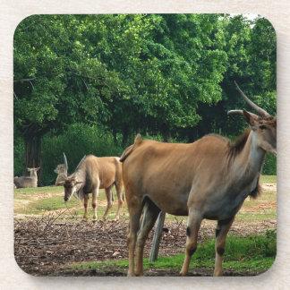 Gazelle, wild animal zoo,羚. beverage coaster