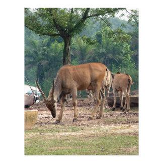 Gazelle, wild animal zoo,羚. full color flyer