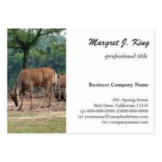 Gazelle, wild animal zoo,羚. large business card