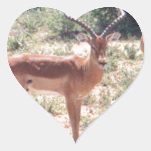 Gazelles en el salvaje pegatina en forma de corazón