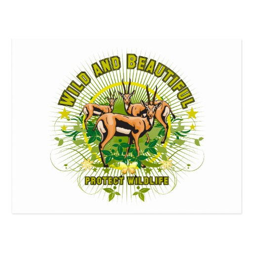Gazelles salvajes y hermosos tarjeta postal