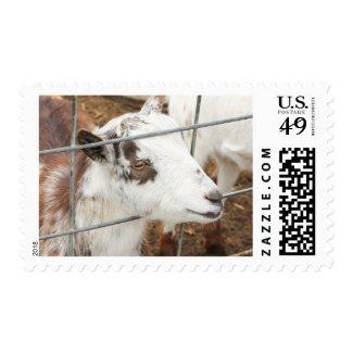 Gazing Goat Postage