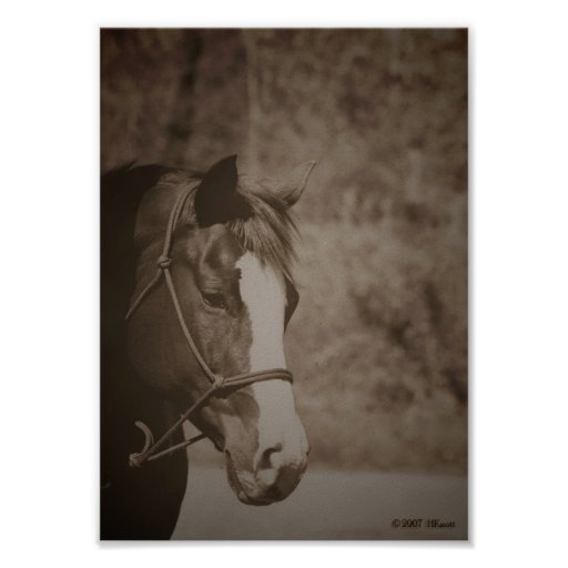 Gazing Mare Poster