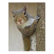 Gazing Squirrel Postcard
