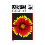Gazinnia Bloom Postage Stamp