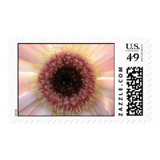 Gebera daisy stamp