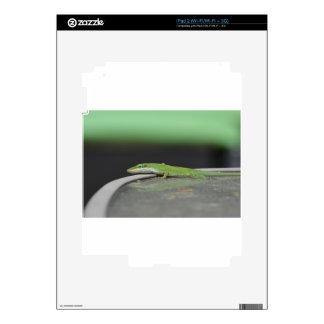 Gecko 9 skin for the iPad 2
