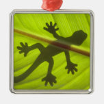 Gecko Adorno