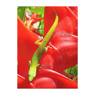 Gecko and Heliconia Canvas Print