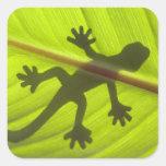 Gecko Calcomanía Cuadradas Personalizada