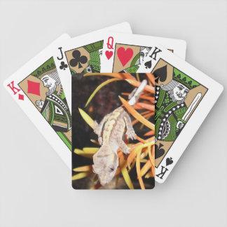 Gecko con cresta del bebé barajas de cartas