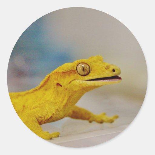 Gecko con cresta emocionado pegatina redonda