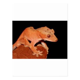 gecko con cresta postales