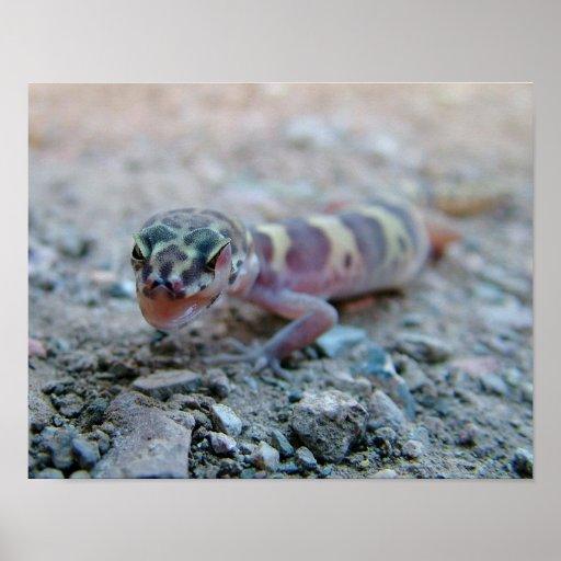 Gecko congregado que lame el ojo impresiones