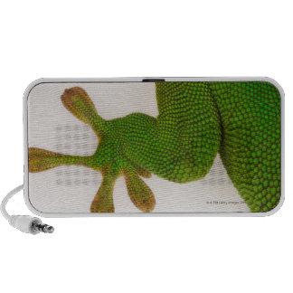 Gecko del día de Madagascar madagascariensis 2 de Laptop Altavoces
