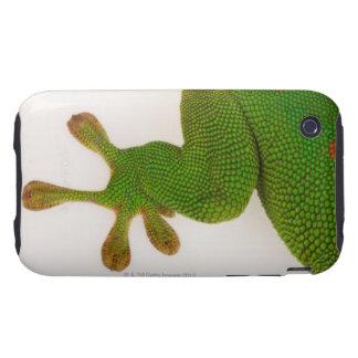 Gecko del día de Madagascar (madagascariensis 2 de iPhone 3 Tough Carcasas
