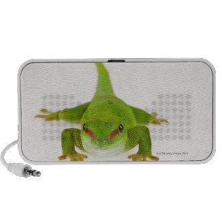 Gecko del día de Madagascar madagascariensis de P Altavoces