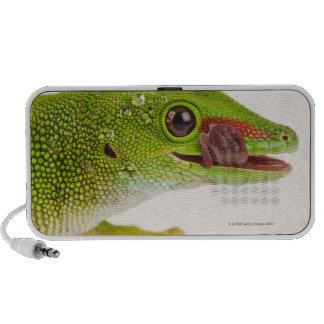 Gecko del día de Madagascar madagascariensis de P Laptop Altavoz