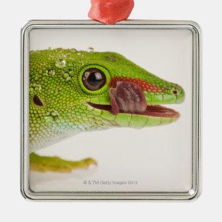 Gecko del día de Madagascar madagascariensis de P Ornamente De Reyes
