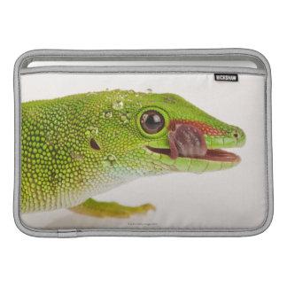Gecko del día de Madagascar madagascariensis de P Fundas Macbook Air