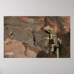 Gecko del día de Namib (Bradfield) Posters