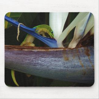 Gecko del día del polvo de oro en la flor tapetes de ratón