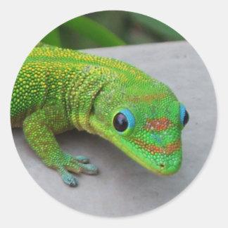 Gecko del día del polvo de oro - haga una prueba y etiqueta redonda