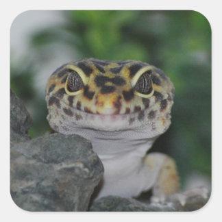 gecko del leopardo pegatina cuadrada