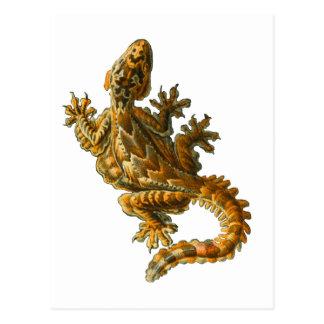 Gecko del vuelo de Kuhl Postales