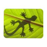 Gecko Imán Rectangular