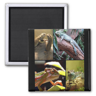 Gecko lizards and Chameleons 2 Inch Square Magnet