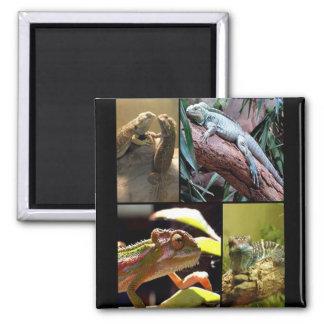 Gecko lizards and Chameleons Magnet