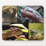 Gecko lizards and Chameleons Mousepad