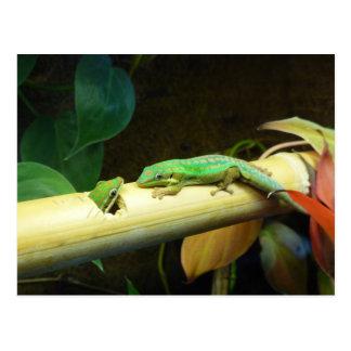 Gecko Love Postcard
