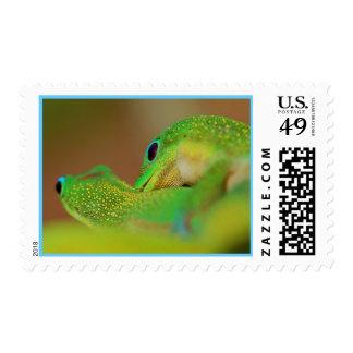 Gecko Love Stamp